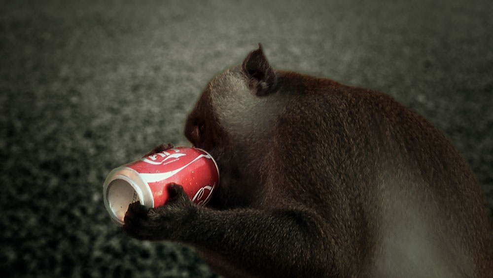 ALL OF US impact tourism monkey drinking cola