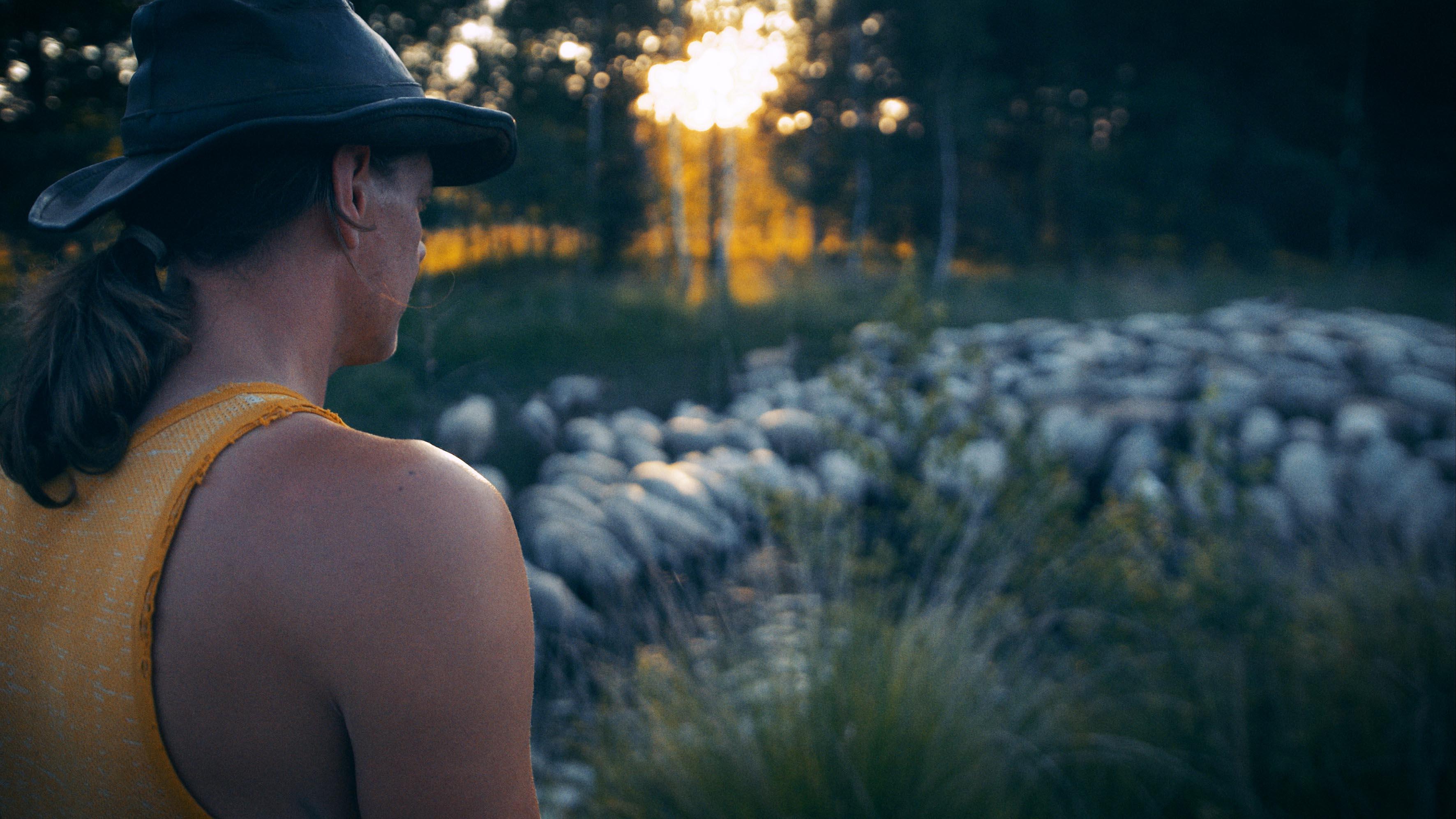 SHEEP HERO | Shepherd