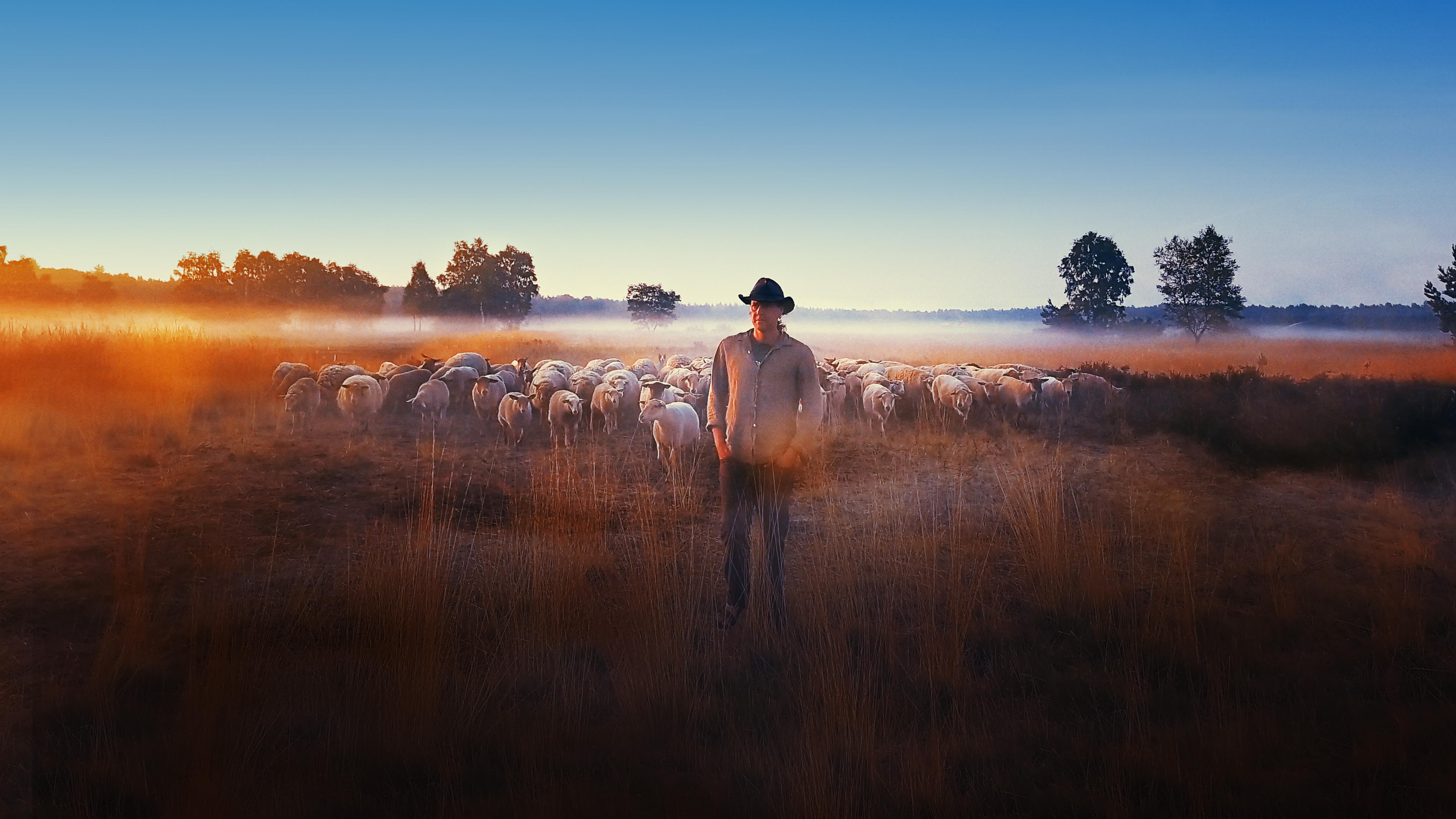 SHEEP HERO poster image Stijn Hilgers