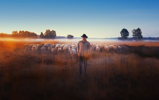 SHEEP_HERO_POSTER-image-web