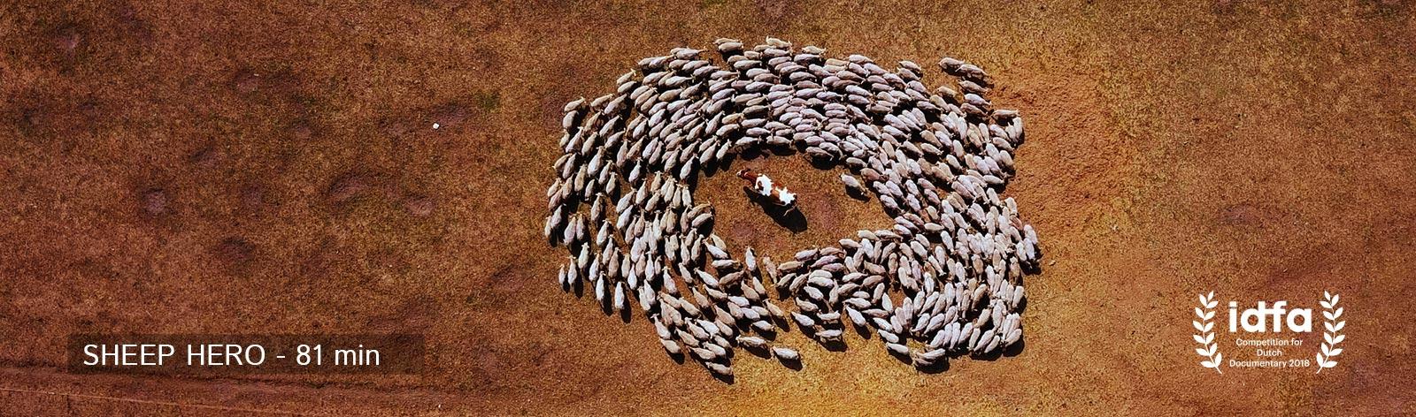 sheephero-scheep-cow-