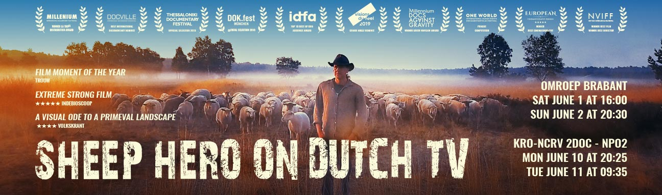 SHEEP-HERO_on_Dutch__TV